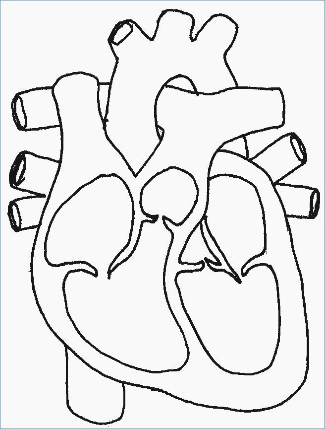Heart Diagram Worksheet Blank Best Of Heart Diagram Drawing at Getdrawings