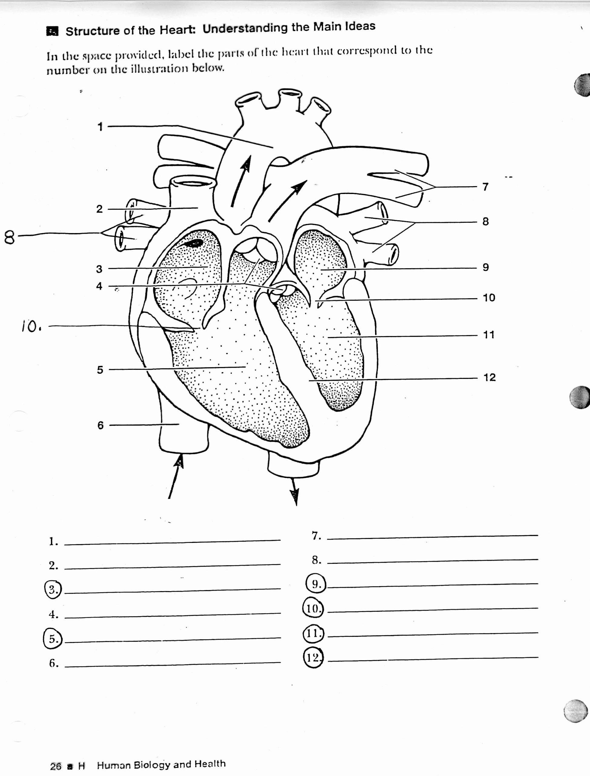 Heart Diagram Worksheet Blank Fresh Account Suspended