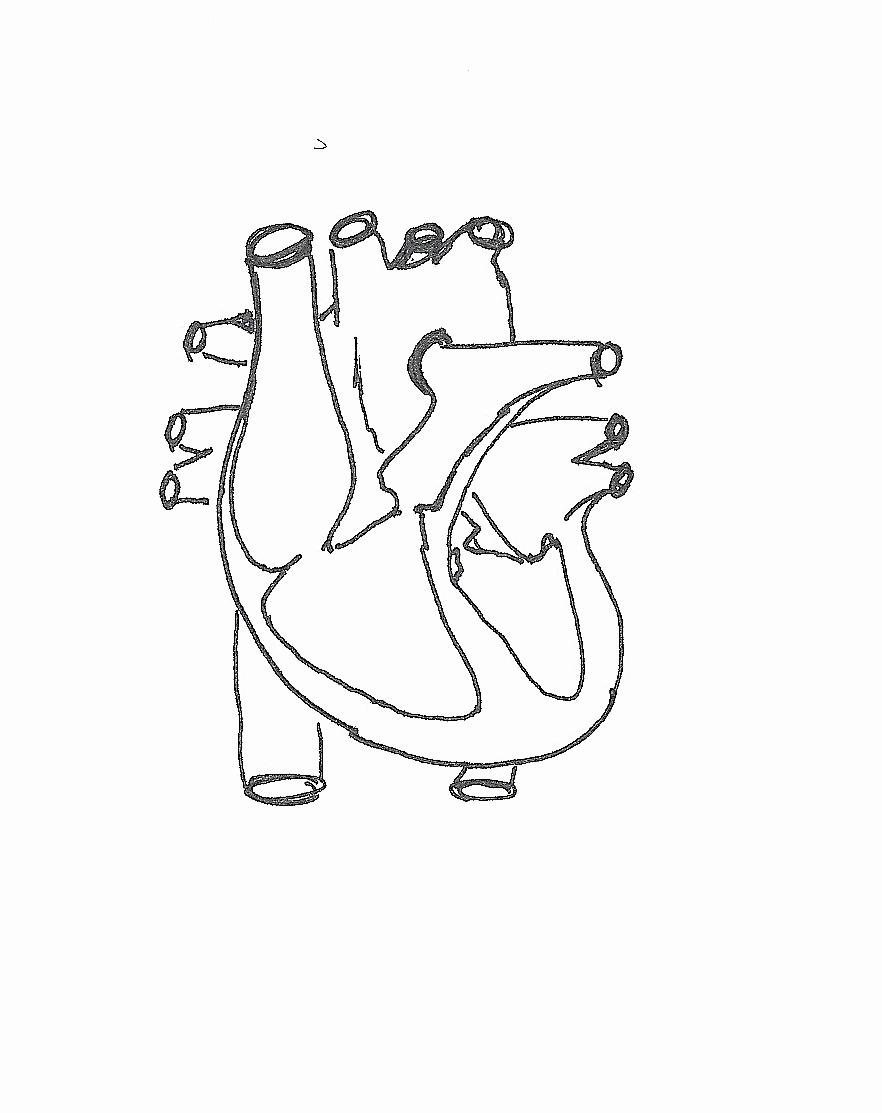 Heart Diagram Worksheet Blank Lovely 31 Blank Diagram the Heart Wiring Diagram List