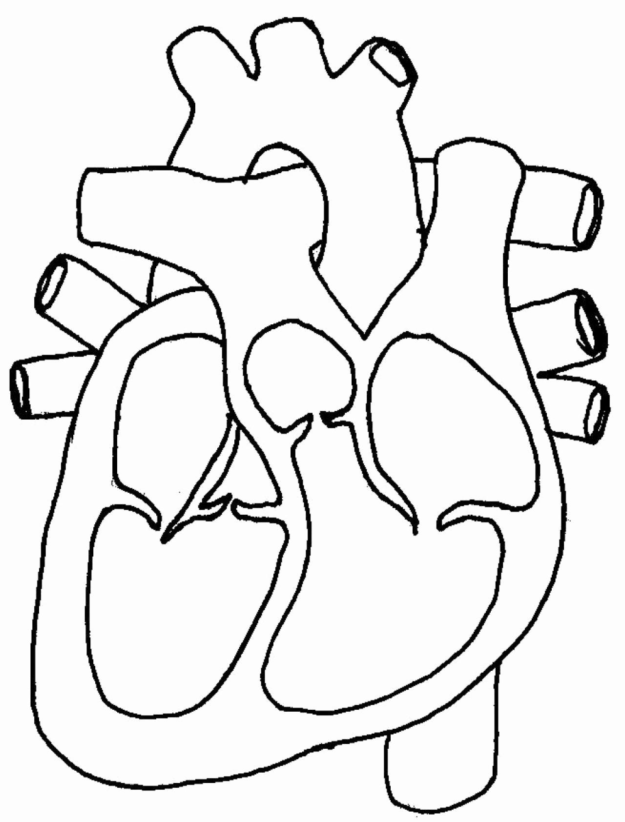 Heart Diagram Worksheet Blank Lovely Free Blank Heart Diagram Download Free Clip Art Free