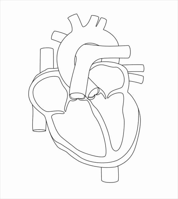 Heart Diagram Worksheet Blank New 19 Heart Diagram Templates – Sample Example format