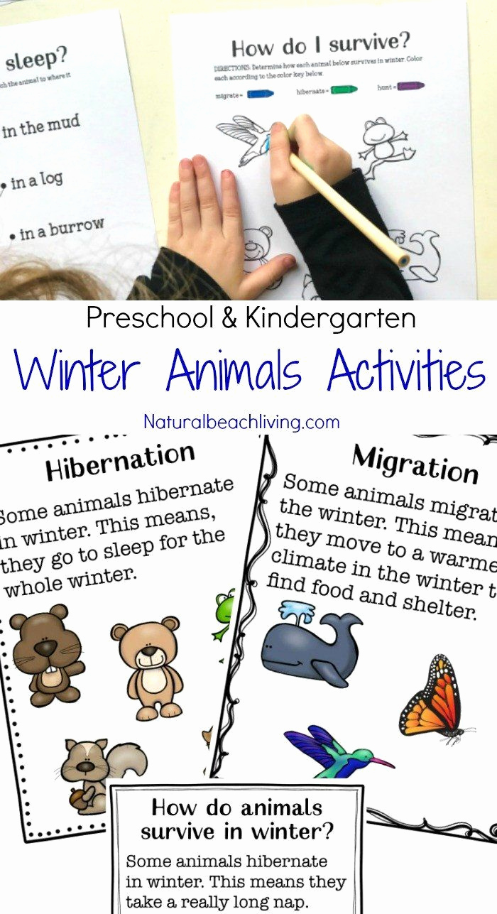 Hibernation Worksheets for Preschool Lovely Hibernation Worksheets for Preschool Winter Animals for