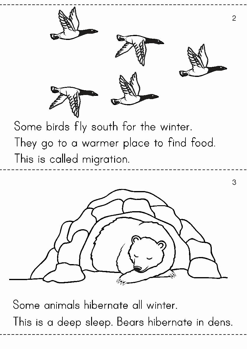 Hibernation Worksheets for Preschool Luxury 20 Hibernation Worksheet for Kindergarten