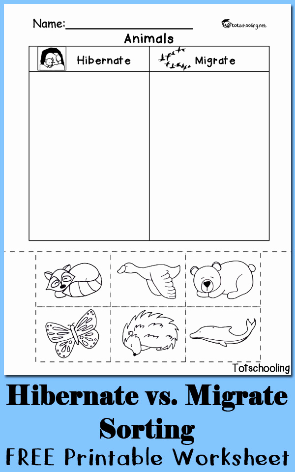 Hibernation Worksheets for Preschool New Hibernation Vs Migration Animal sorting Worksheet