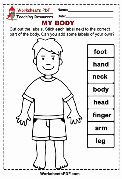 Human Body Worksheets Middle School Beautiful My Body – Free Printables In 2020