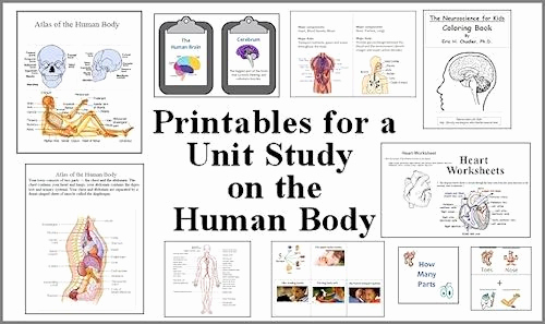 Human Body Worksheets Middle School Beautiful the Latest