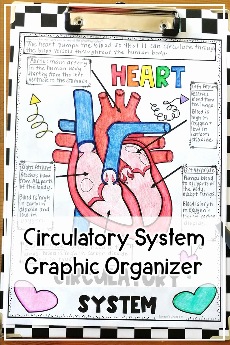 Human Body Worksheets Middle School Fresh Digestive System Activities