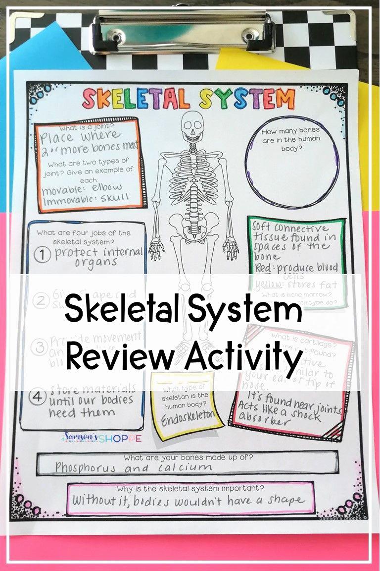 Human Body Worksheets Middle School Inspirational Skeletal System Activity Worksheet