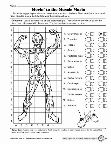 Human Body Worksheets Middle School Lovely Muscular System Worksheet …