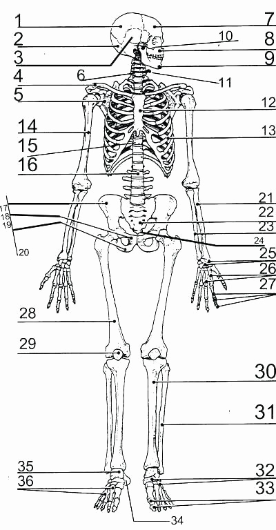 Human Body Worksheets Middle School Lovely Pin On Examples Printable Preschool Worksheets