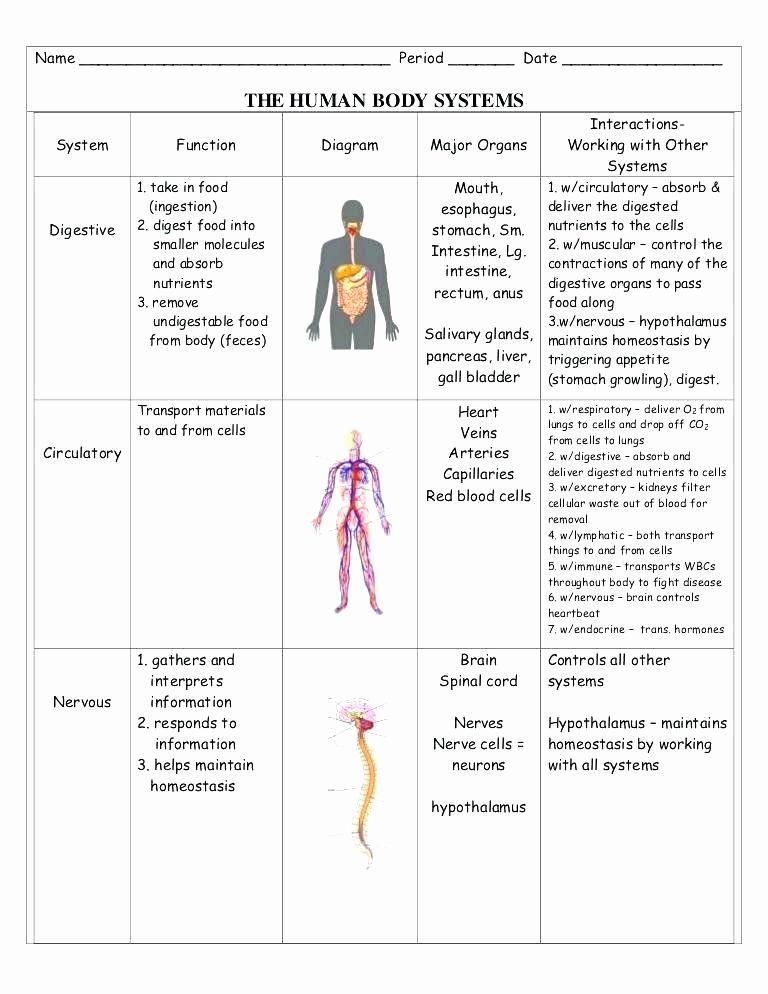 Human Body Worksheets Middle School Luxury Digestive System Worksheets Middle School En organ Systems