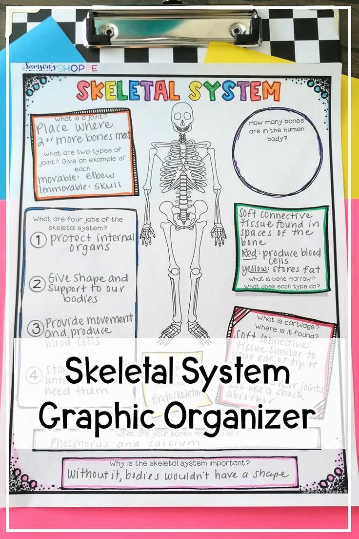 Human Body Worksheets Middle School Luxury Skeletal System Activity Worksheet