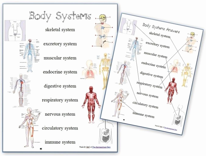 Human Body Worksheets Middle School New Free Human Body Systems Worksheets Homeschool Giveaways