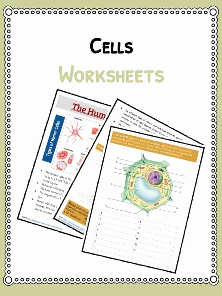 Informational Text Worksheets Middle School Fresh Informational Text Worksheets Middle School Cell Facts