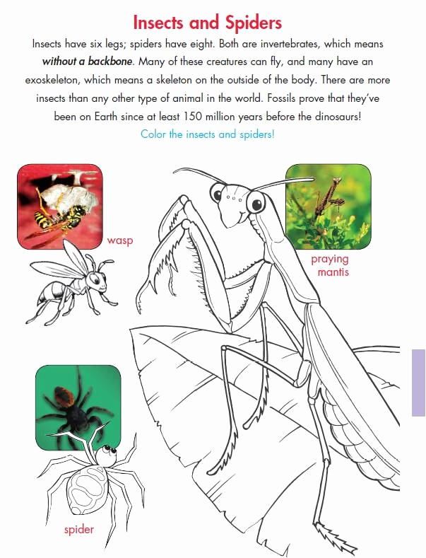Insect Worksheets for First Grade Awesome New 154 First Grade Insect Worksheets