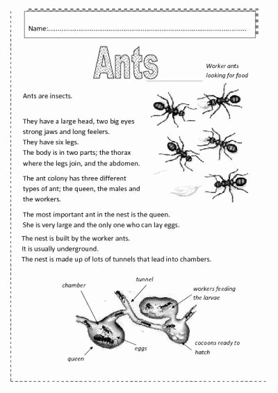 Insect Worksheets for First Grade Beautiful Insects Worksheets Free