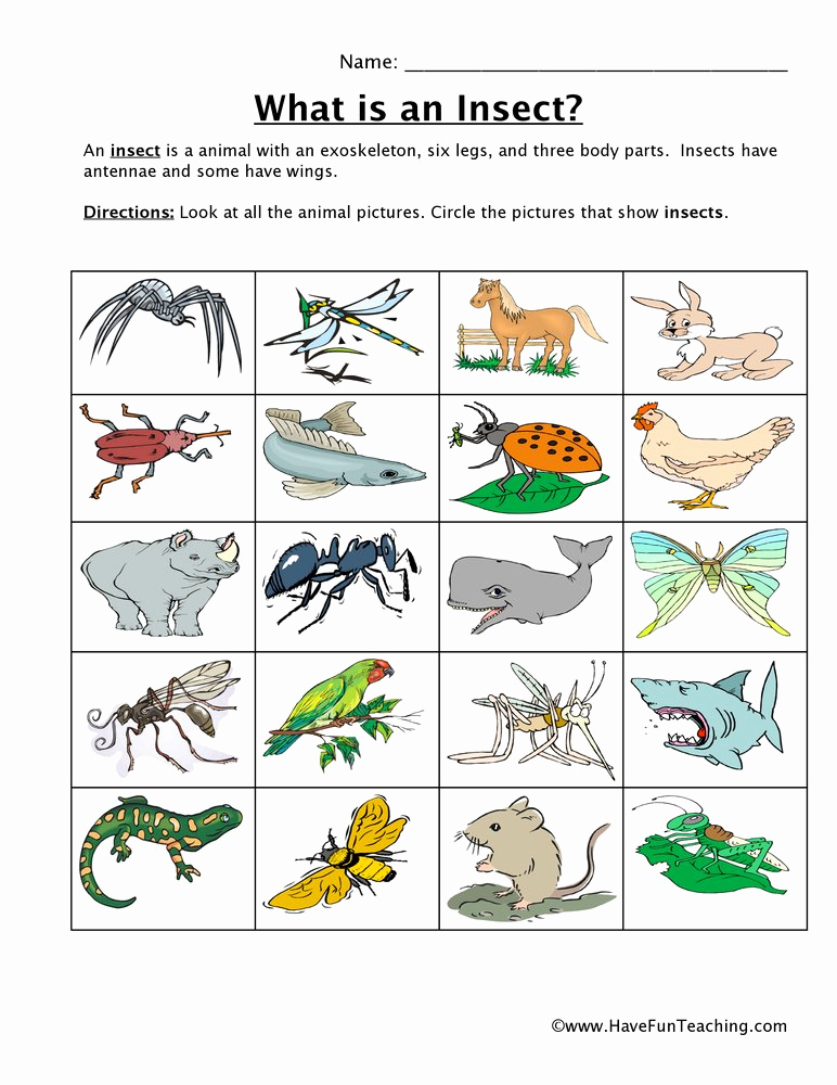 Insect Worksheets for First Grade Elegant Insect Classification Worksheet
