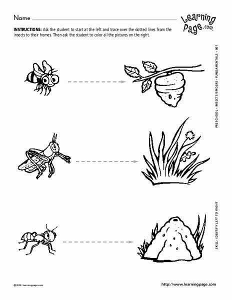 Insect Worksheets for First Grade Fresh Insect Homes Worksheet for 1st Grade