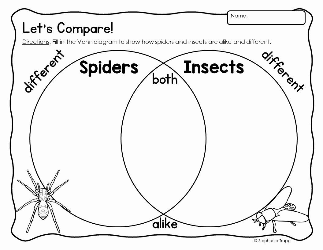 Insect Worksheets for First Grade Inspirational Spider Unit for Kindergarten and First Grade Primary