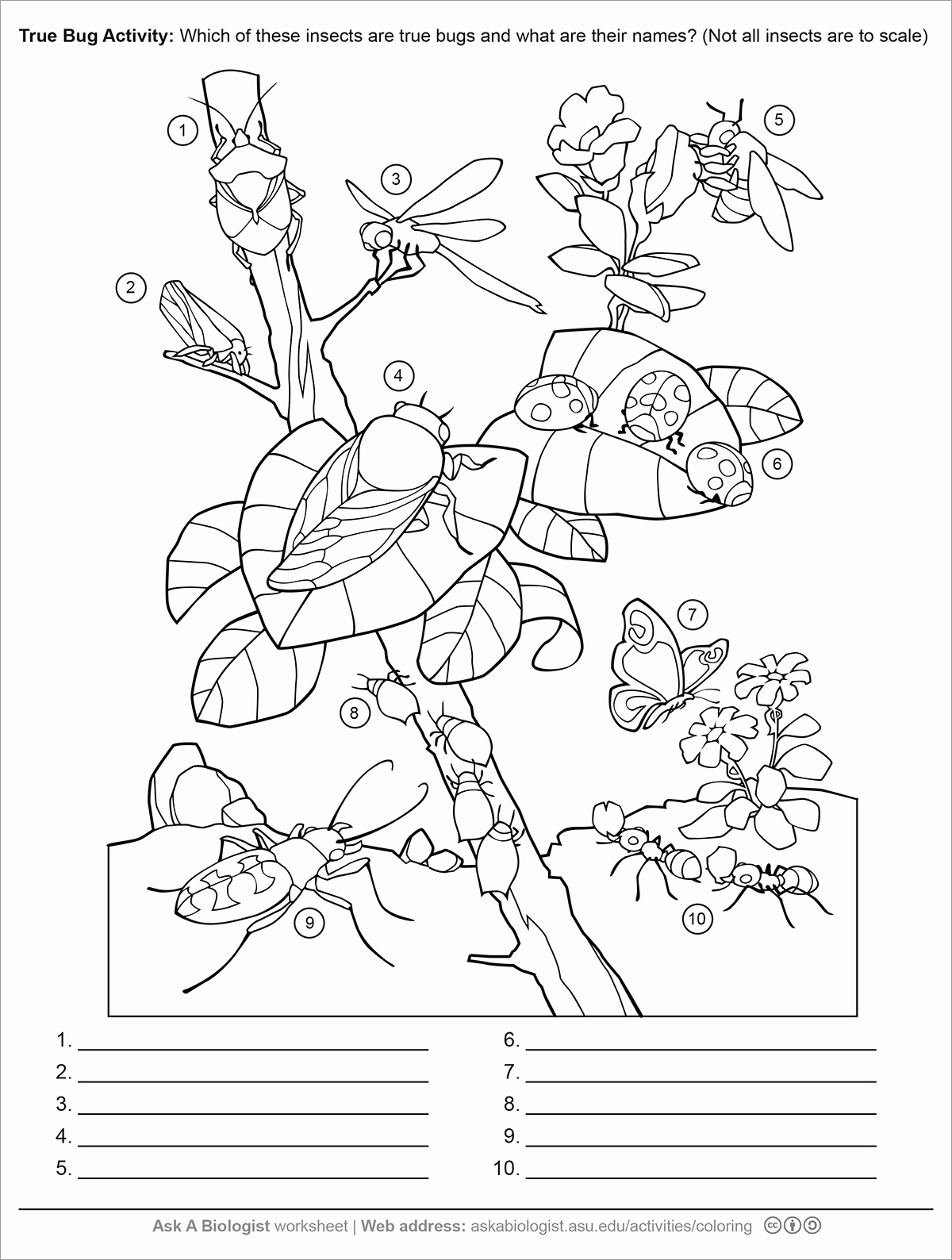 Insect Worksheets for First Grade New 1st Grade Sentence Starters