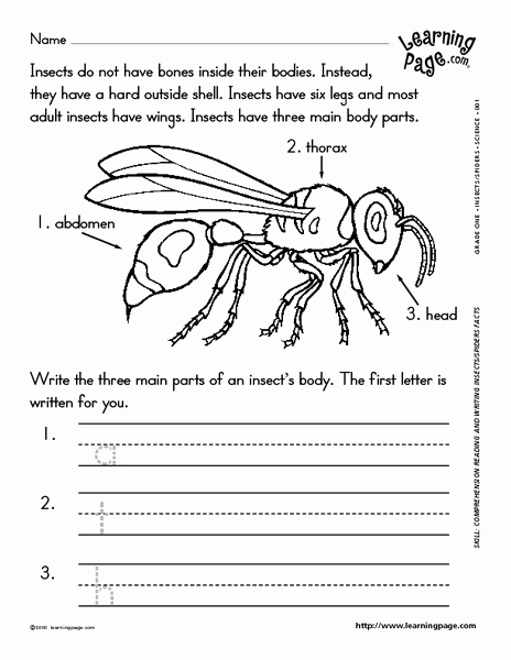 Insect Worksheets for First Grade New Reading and Writing About Insects Worksheet for 1st 2nd