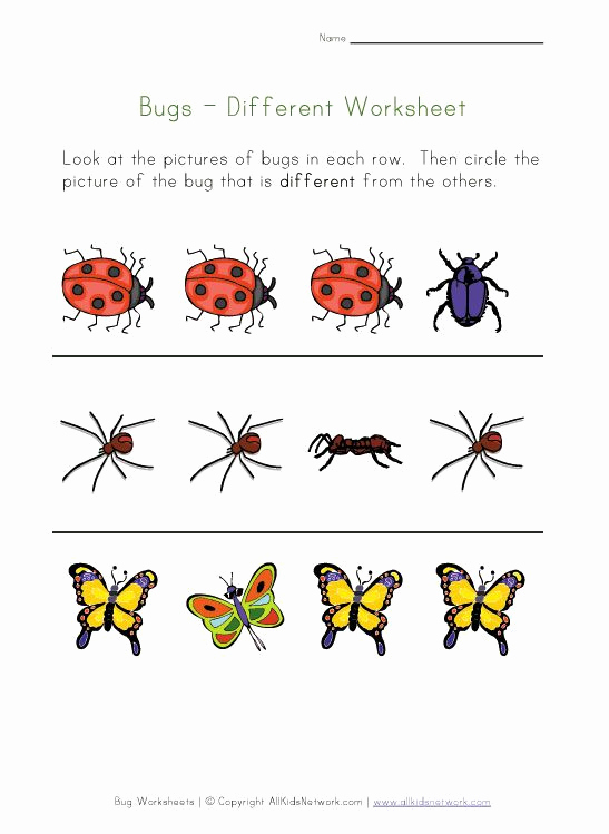 Insect Worksheets for Preschoolers Best Of Bugs Worksheet Recognize Different Insects