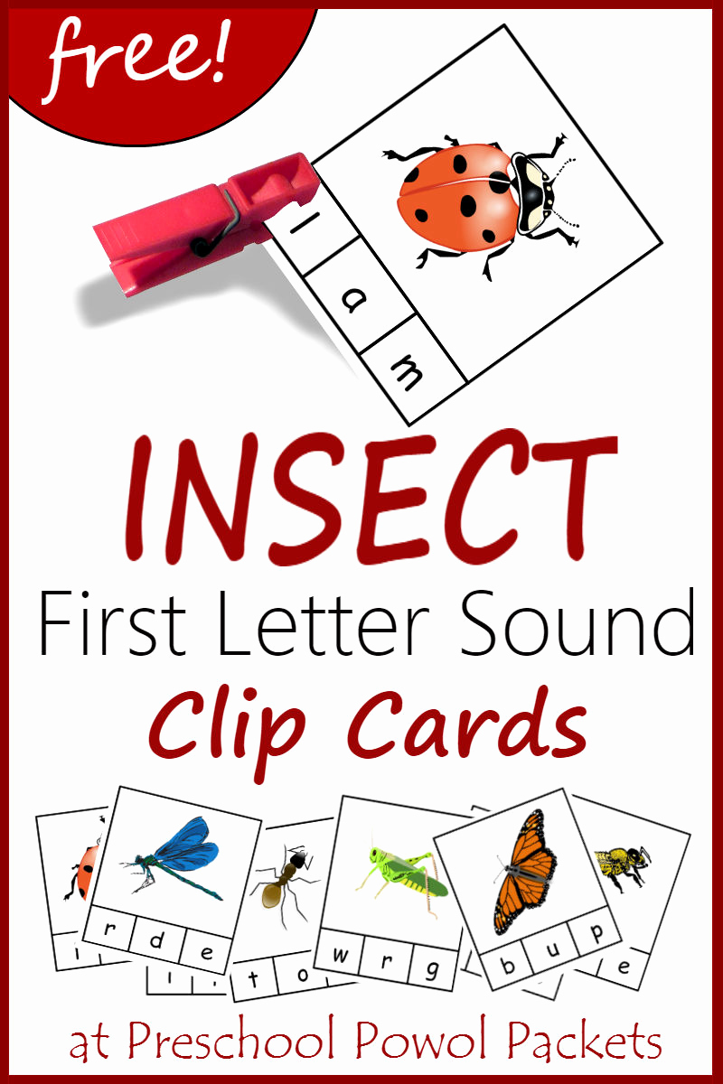 Insect Worksheets for Preschoolers Best Of Insect Bug & Spider themed Free Preschool Printables