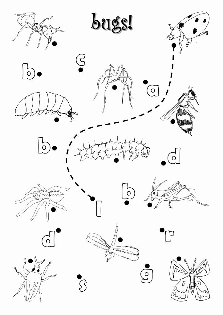 Insect Worksheets for Preschoolers Elegant 12 Best Of Insect Worksheets for Kindergarten