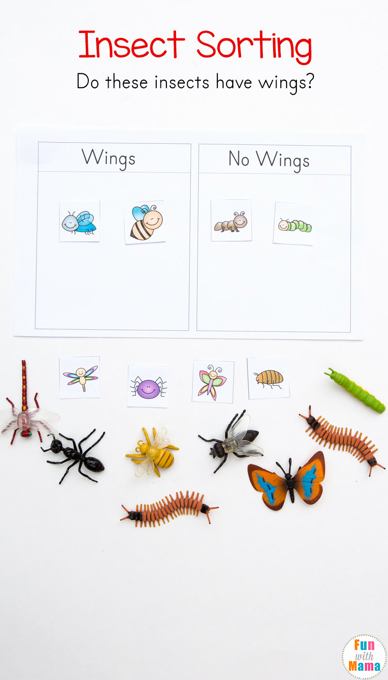 Insect Worksheets for Preschoolers Elegant Preschool Insect theme sorting Worksheet Bug Activities