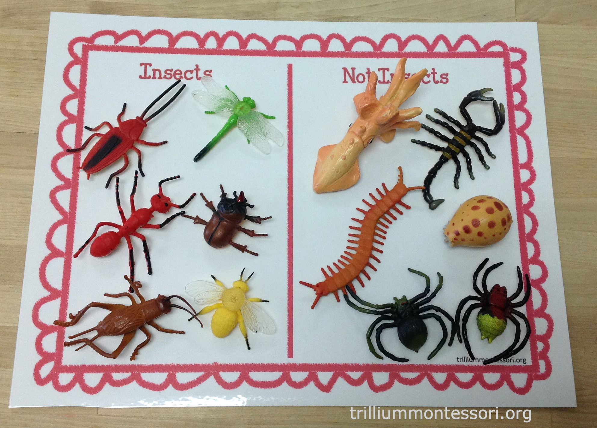 Insect Worksheets for Preschoolers Lovely Learning About Bugs Montessori Inspiration at Home