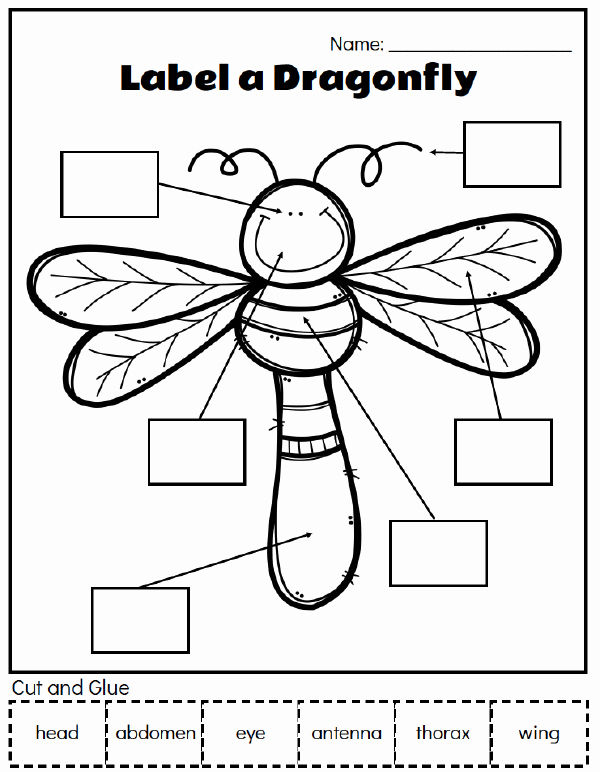 Insect Worksheets for Preschoolers Luxury Insect Unit Study