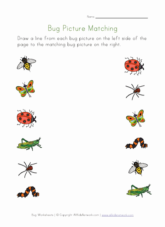 Insect Worksheets for Preschoolers New 6 Best Of Free Printable Bug Worksheets Free