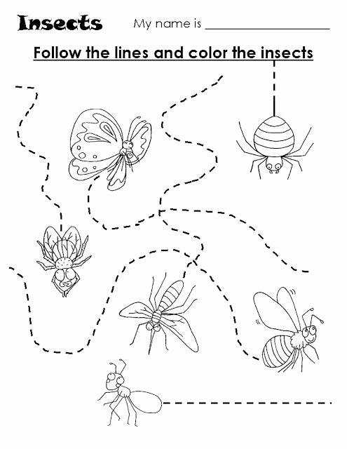 Insect Worksheets for Preschoolers New Crafts Actvities and Worksheets for Preschool toddler and
