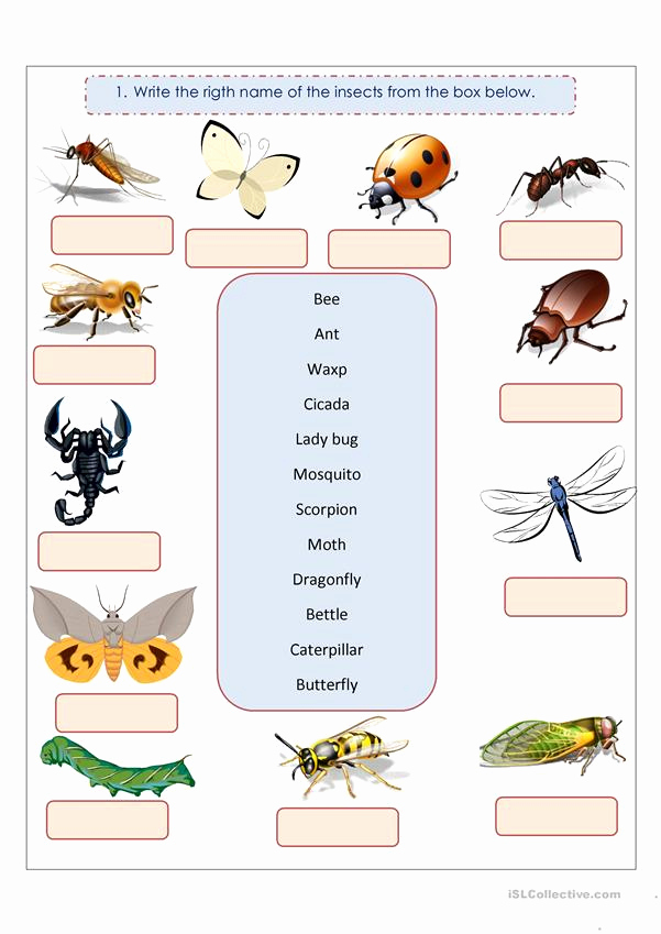 Insect Worksheets for Preschoolers Unique Insects Worksheet Free Esl Printable Worksheets Made by