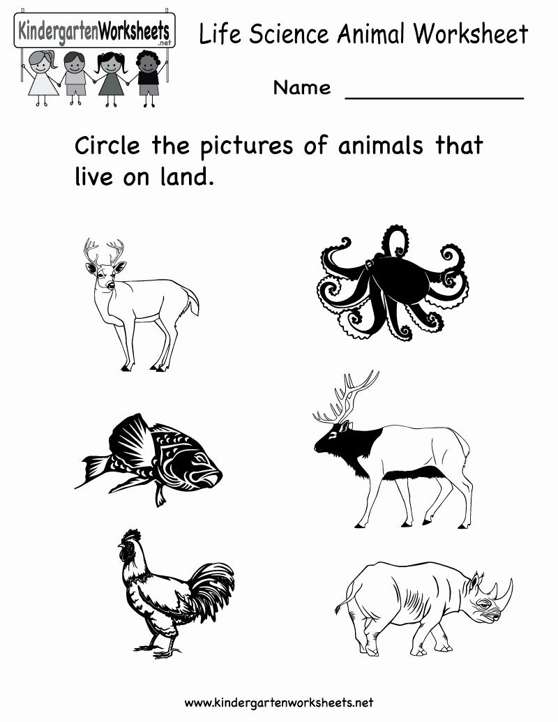 Kindergarten Science Worksheets Beautiful 12 Best Of Animal Worksheets for Kindergarten