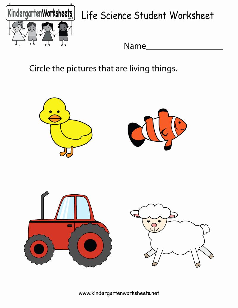 Kindergarten Science Worksheets Beautiful 31 Science Worksheet for Kindergarten Worksheet Iist source