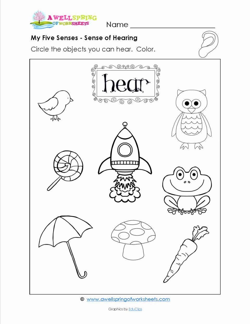 Kindergarten Science Worksheets New Free Science Worksheet Preschool Science Free