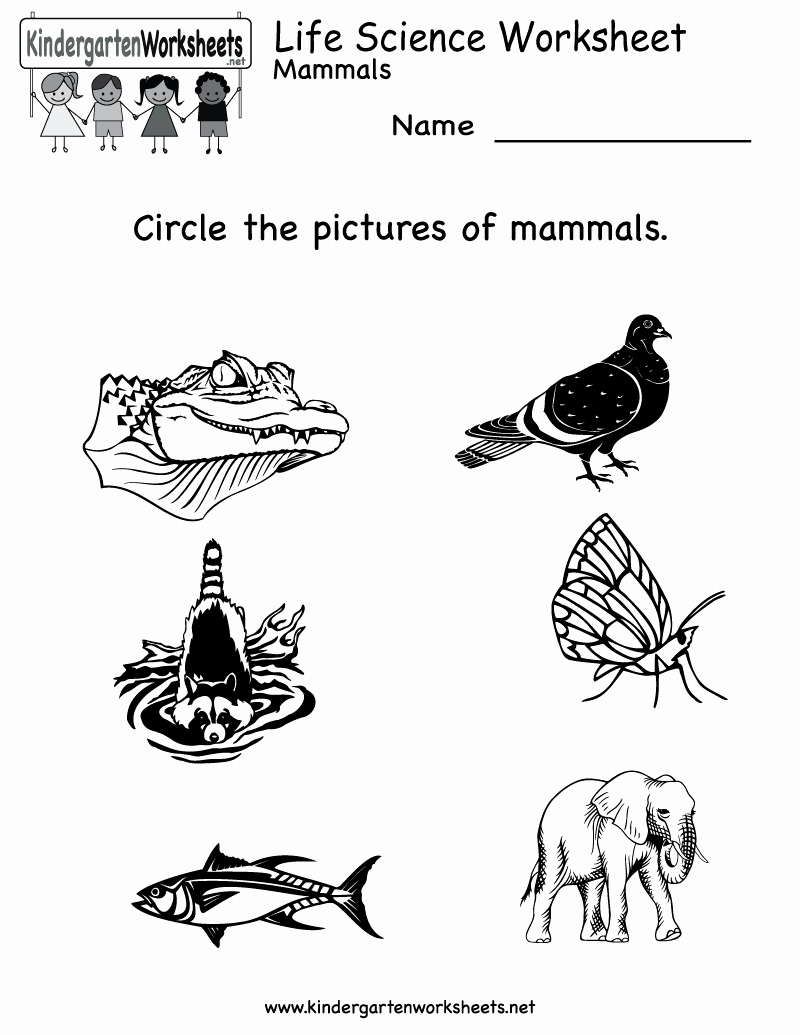 Kindergarten Science Worksheets Unique 77 Kindergarten Science Worksheets Pinterest