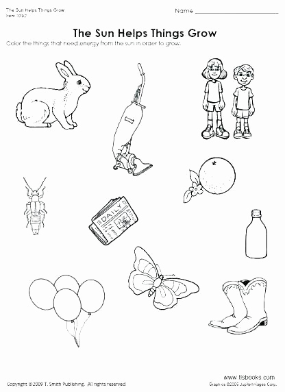 Mammals Worksheets for 2nd Grade Beautiful 25 Mammals Worksheets for 2nd Grade