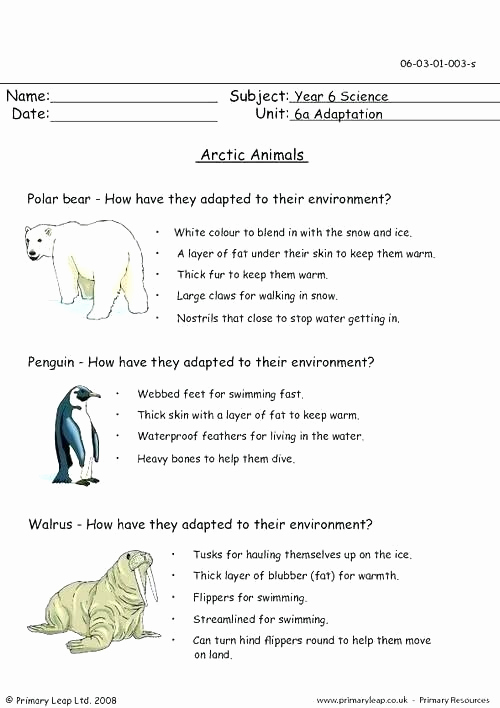 Mammals Worksheets for 2nd Grade Elegant 25 Mammals Worksheets for 2nd Grade