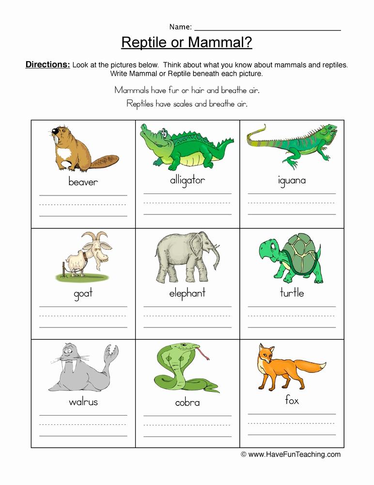 Mammals Worksheets for 2nd Grade Fresh 20 Mammals Worksheets for 2nd Grade