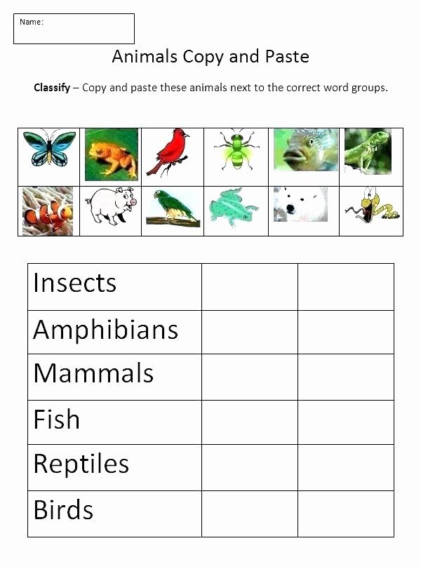 Mammals Worksheets for 2nd Grade Lovely 25 Mammals Worksheets for 2nd Grade