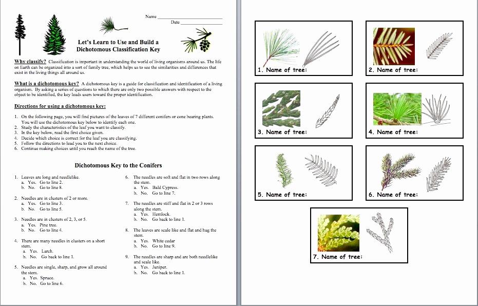 Middle School Science Worksheets Pdf Best Of 50 Dichotomous Key Worksheet Middle School