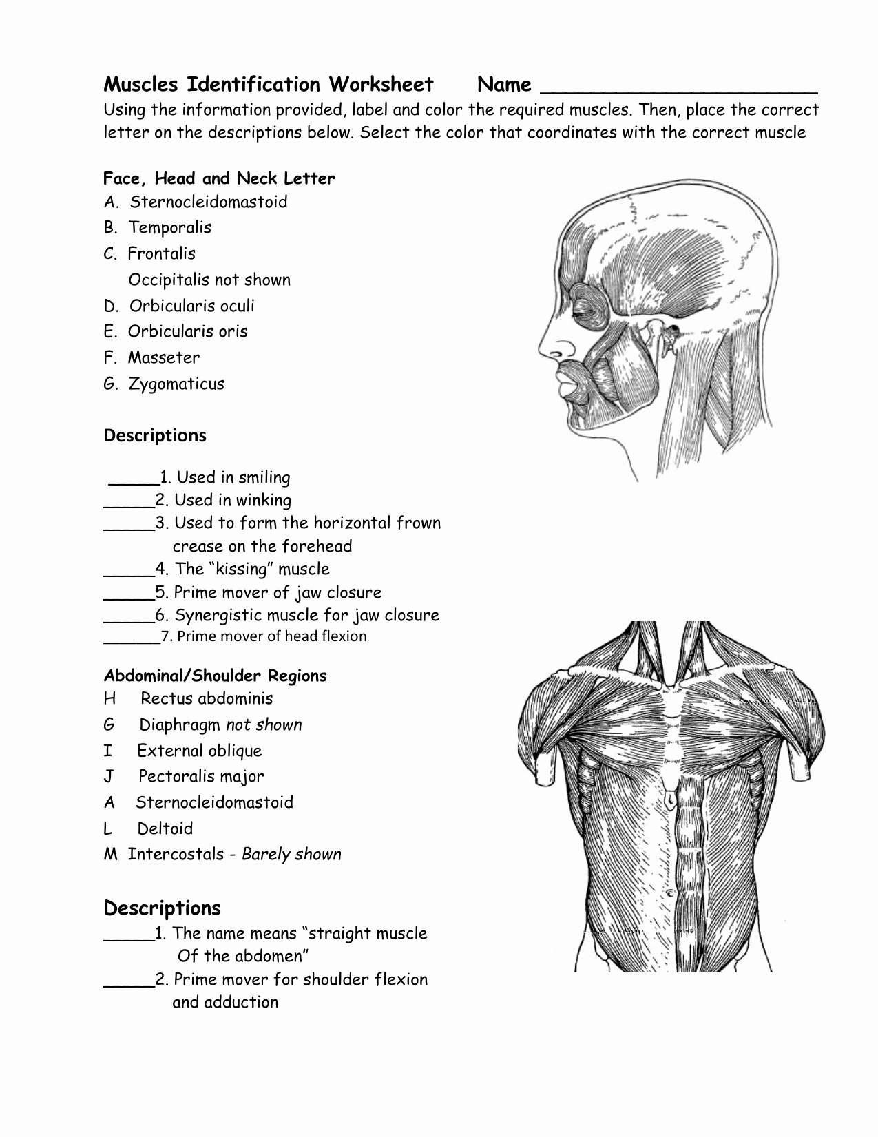 Muscle Diagram Worksheets Awesome 33 Label the Muscular System Worksheet Labels Design