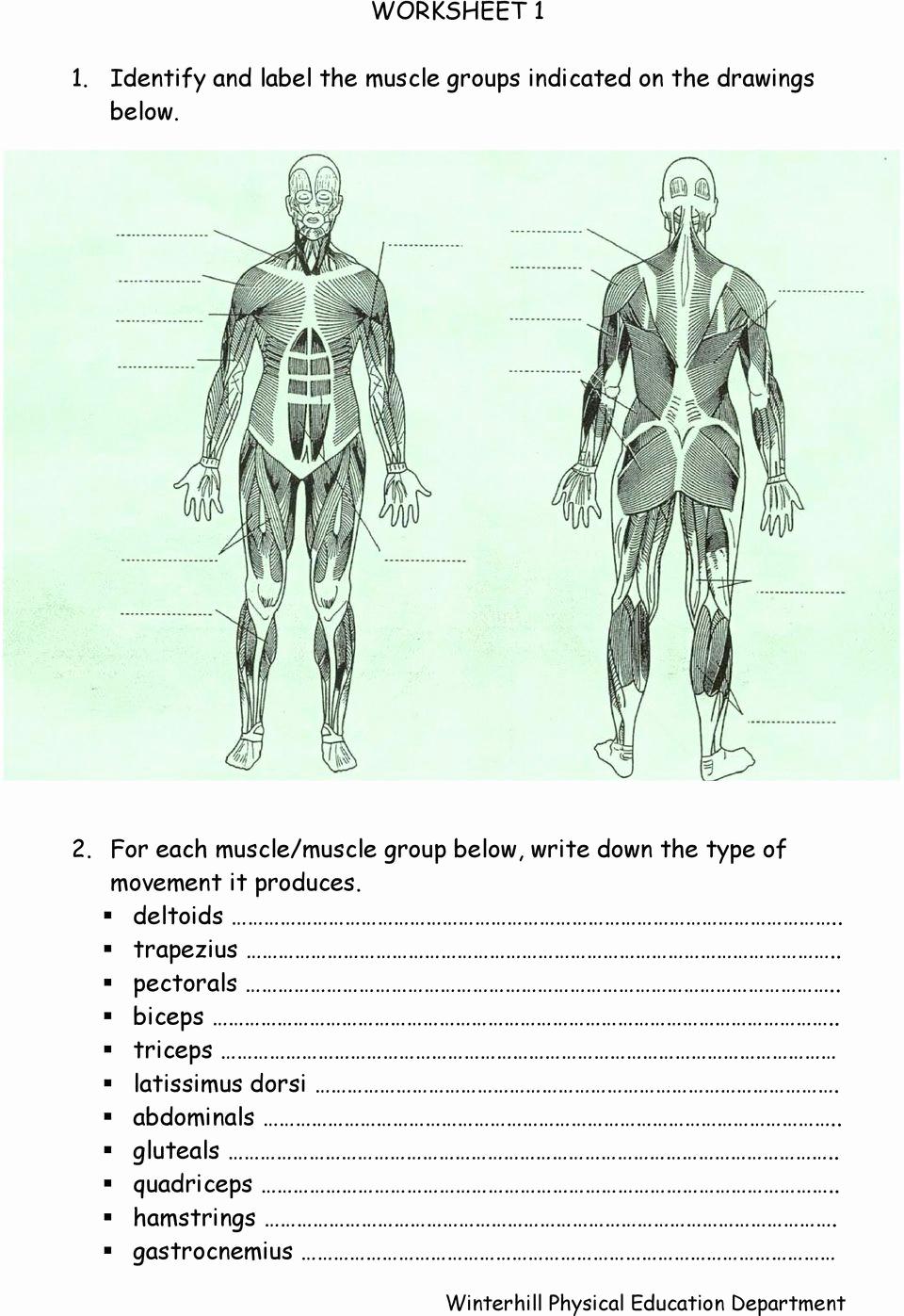 Muscle Diagram Worksheets Awesome 34 Label Muscular System Worksheet Labels Design Ideas 2020