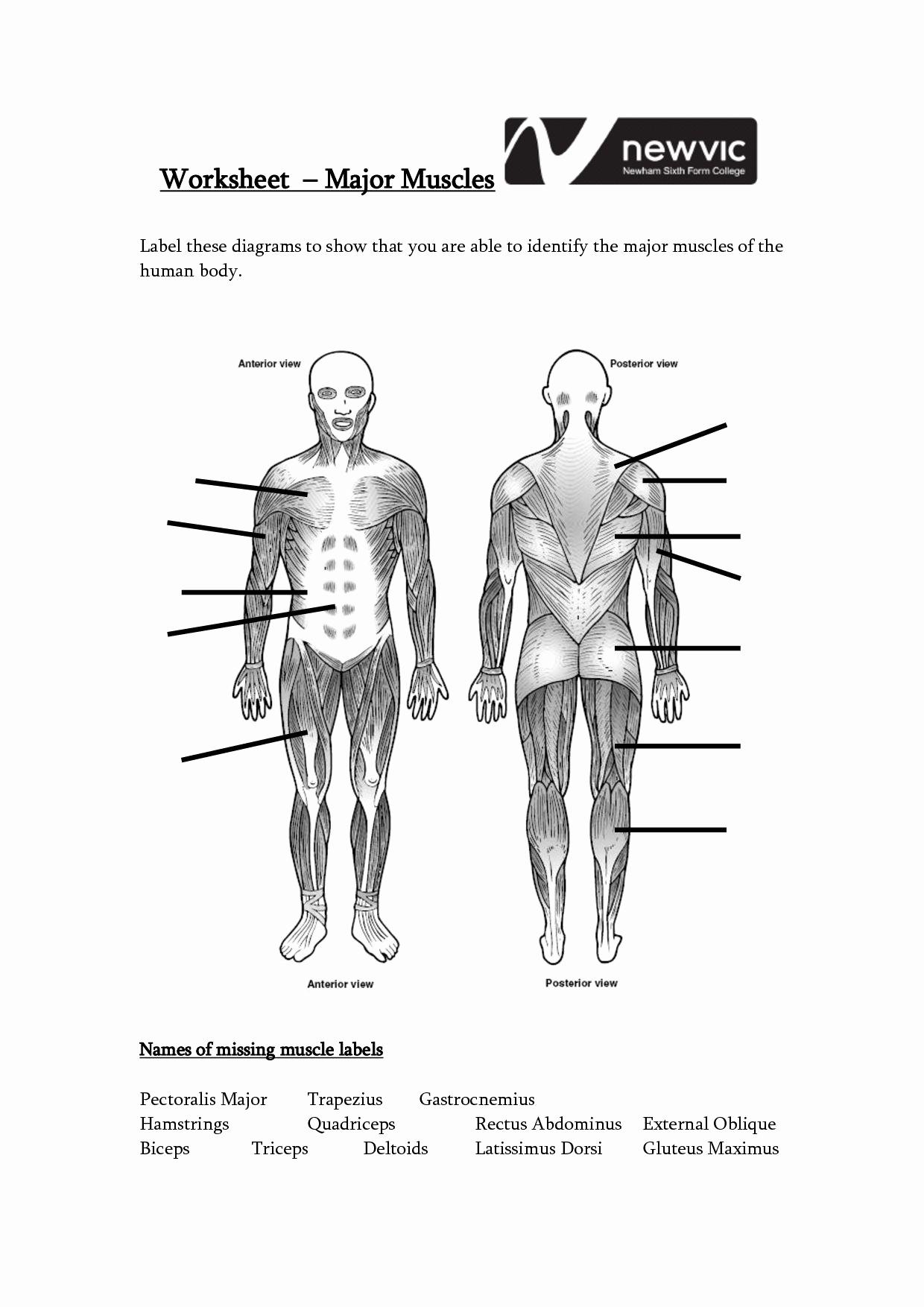 Muscle Diagram Worksheets Inspirational Muscle Diagram Blank Koibanafo