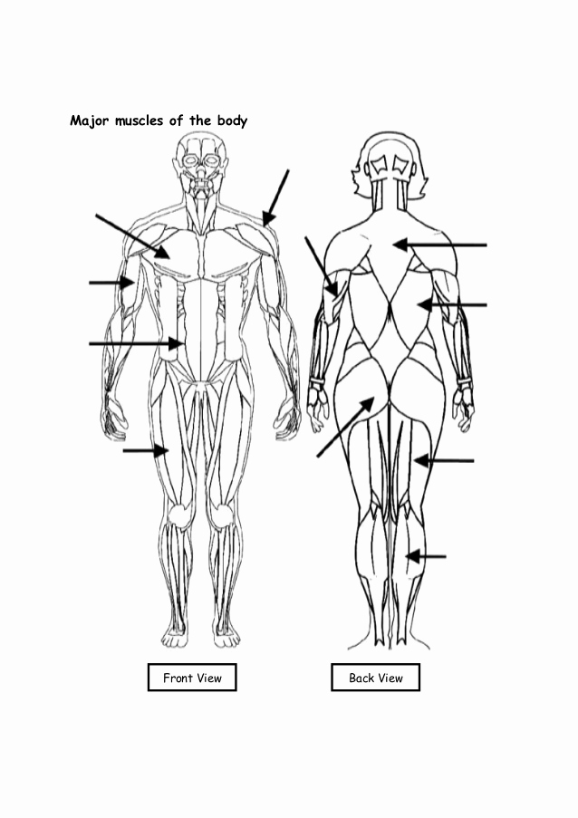 Muscle Diagram Worksheets Inspirational Work Sheets