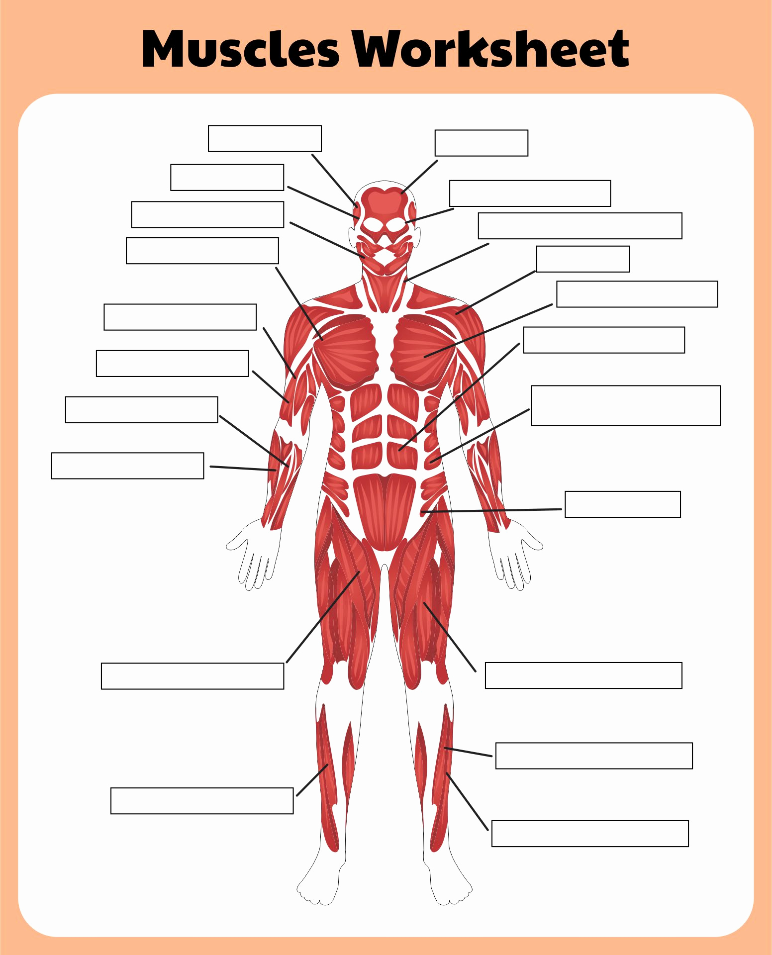 Muscle Diagram Worksheets Lovely 10 Best Printable Worksheets Muscle Anatomy Printablee