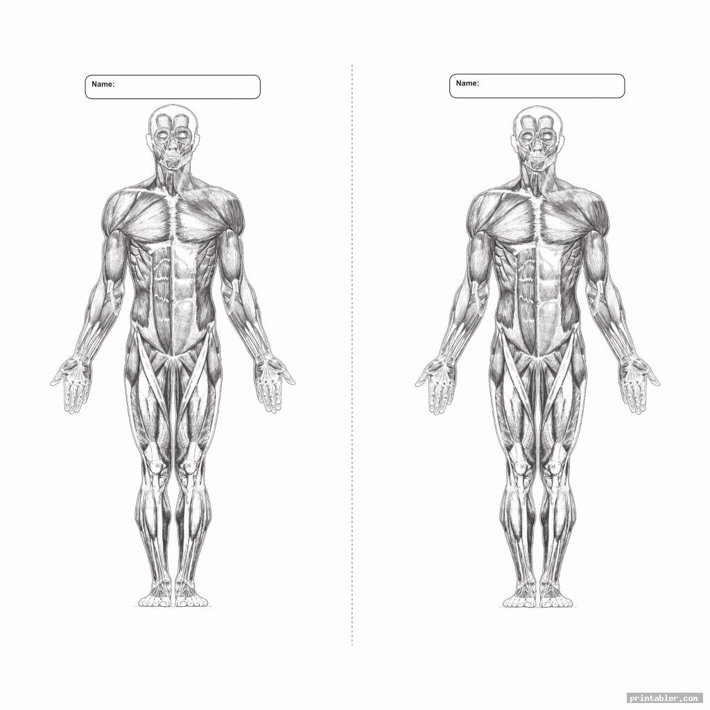 Muscle Diagram Worksheets Luxury 26 Blank Muscle Diagram to Label Wiring Database 2020