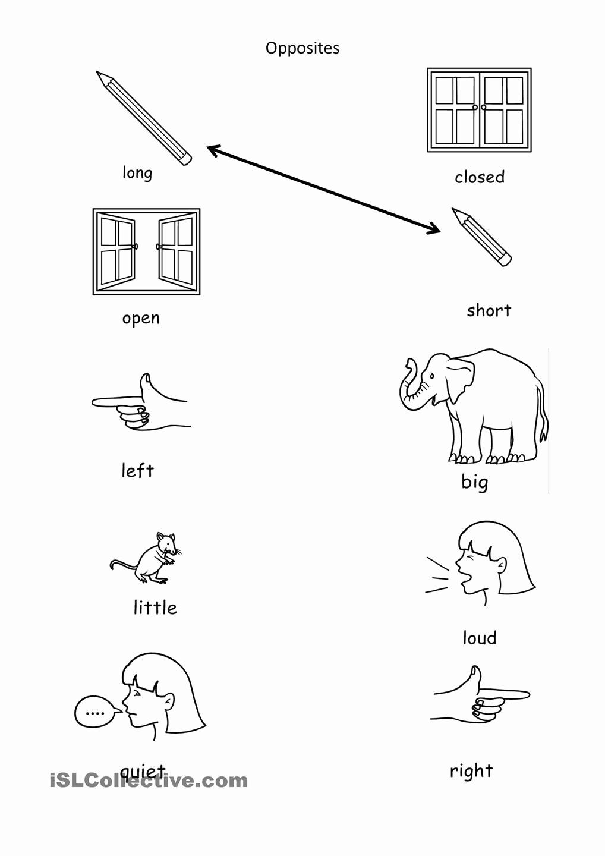 Opposites Preschool Worksheets Fresh Image Result for Opposites Activities Preschool